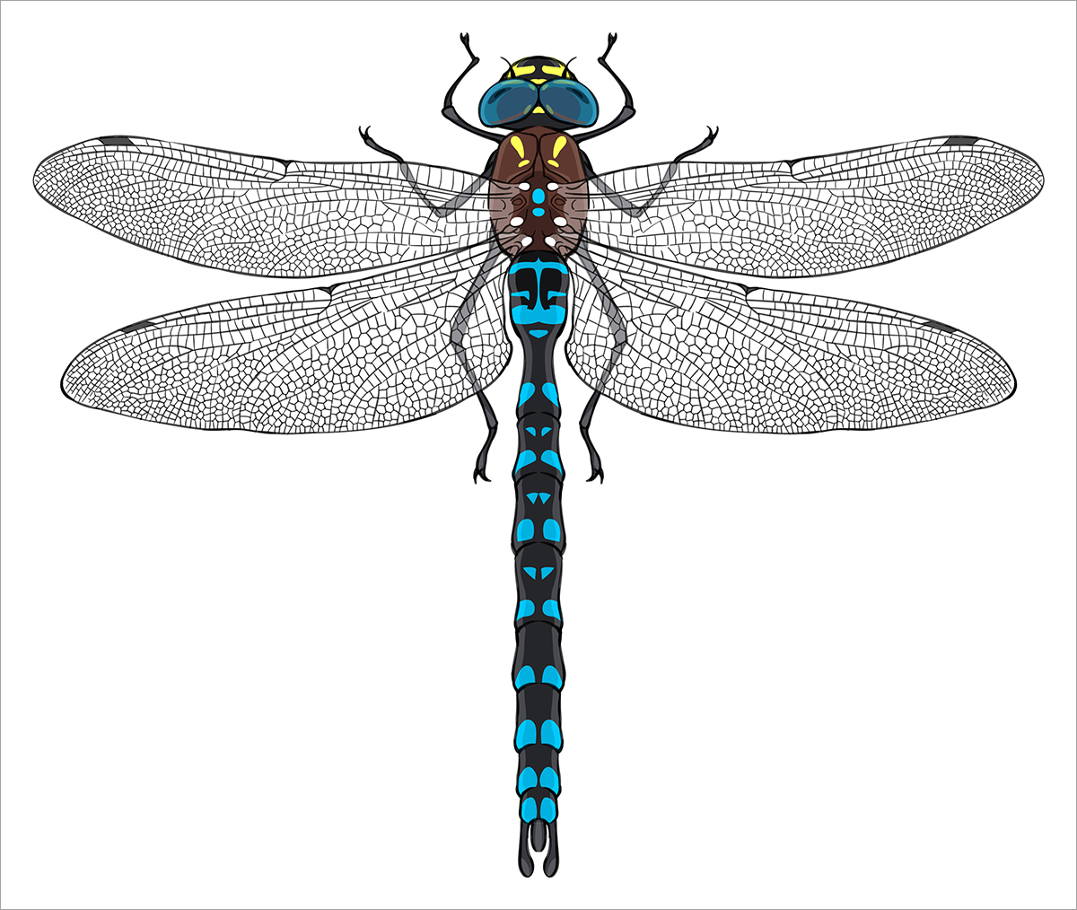 paddle tailed darner dragonfly deviche designs