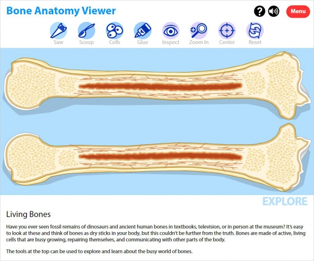 Bone Anatomy Viewer with bone sliced open in the Explore mode