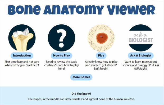 Bone Anatomy Viewer, main screen