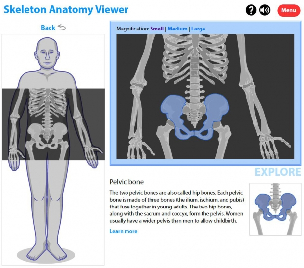 Skeleton Anatomy Viewer, explore mode