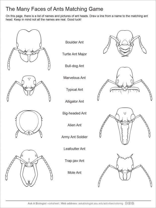 Ant head matching game worksheet.