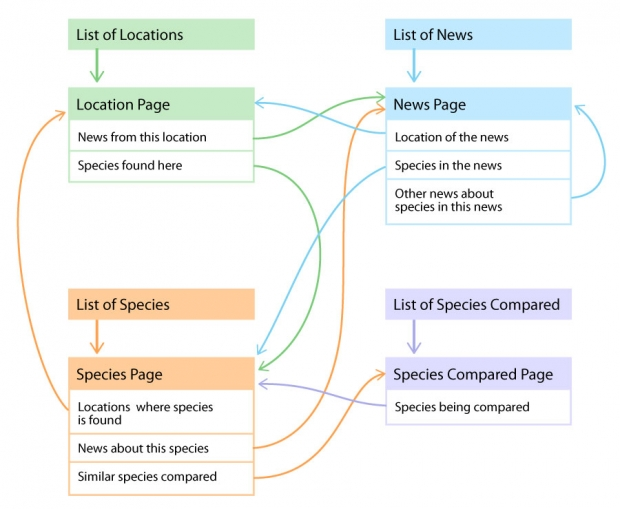 Arizona Dragonflies: Connections map of main page types.