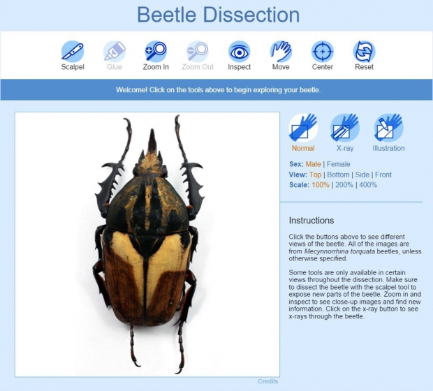 Beetle dissection activity main introduction screen.
