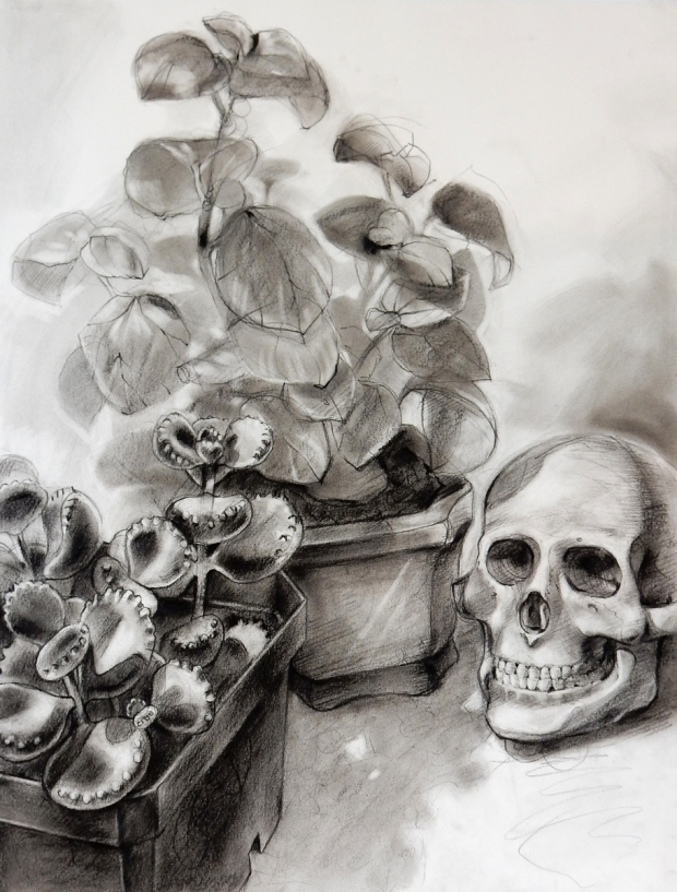 Charcoal drawing: Plants and Skull