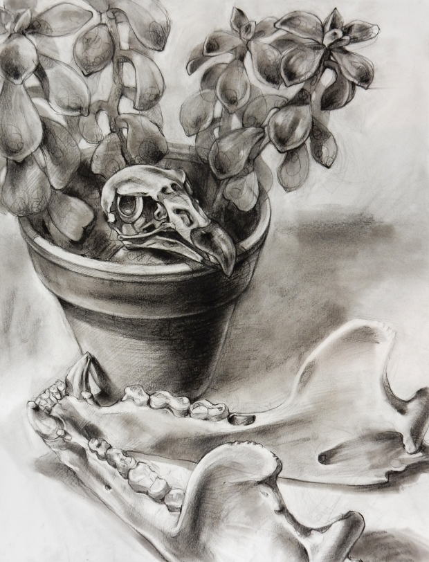 Charcoal drawing: Plant and Bones