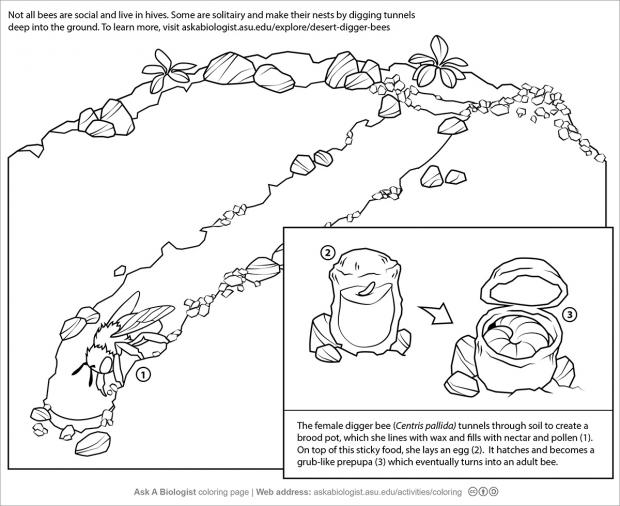 Digger bees coloring page.