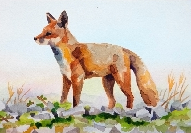 Postcard-sized watercolor painting of a fox.