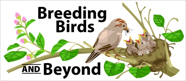 Story Header: Breeding Birds and Beyond