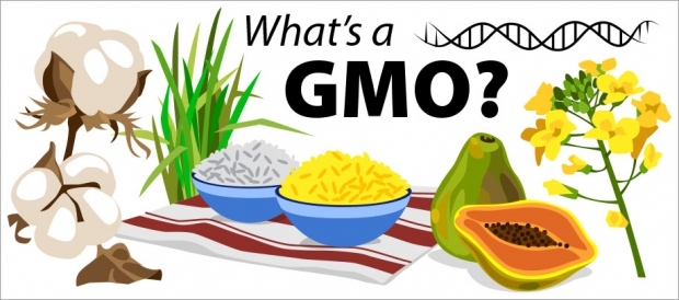 Story Header: What's a GMO?