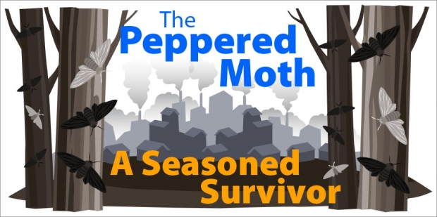 Story Header: The Peppered Moth, A Seasoned Survivor