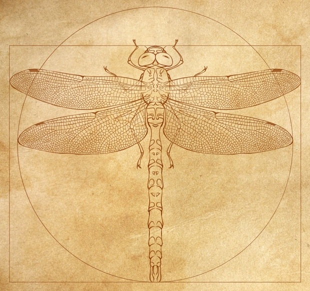 Illustration of a Paddle-tailed Darner dragonfly in the style of Leonardo da Vinci's Vitruvian Man for Jim Walker.