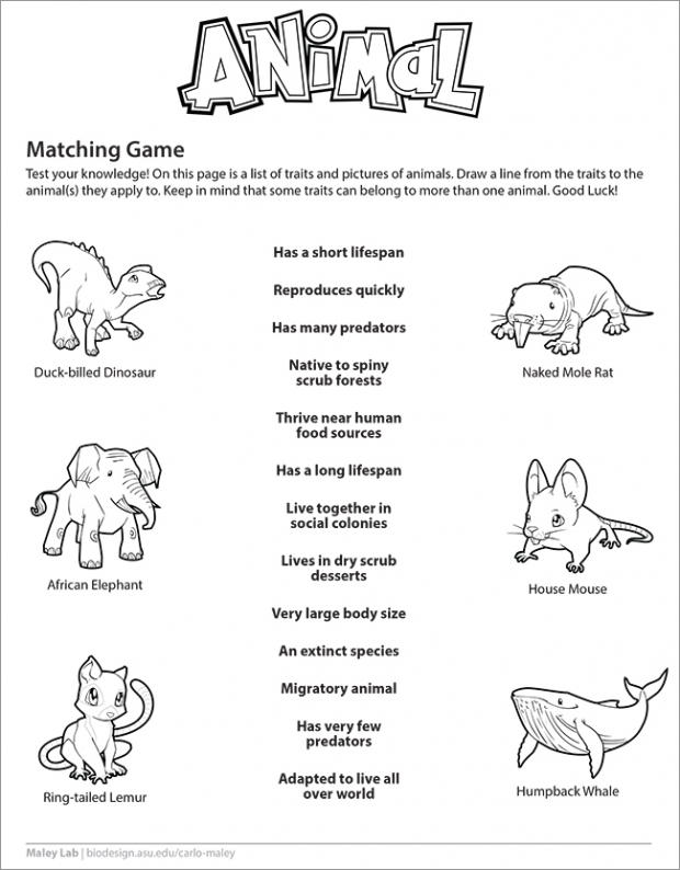 Animal Matching Game Worksheet