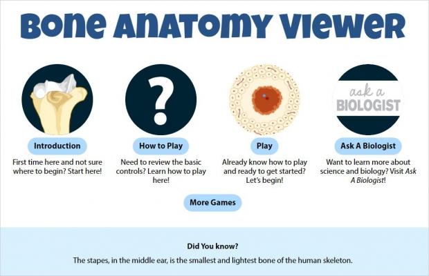 Bone Anatomy Viewer, main screen