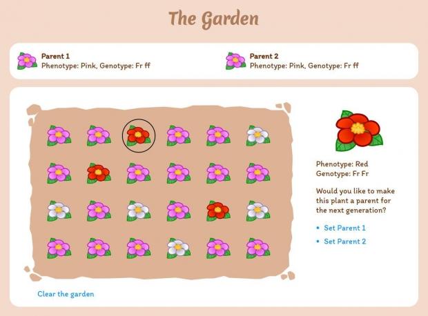 Field of Alleles: The garden in full bloom.