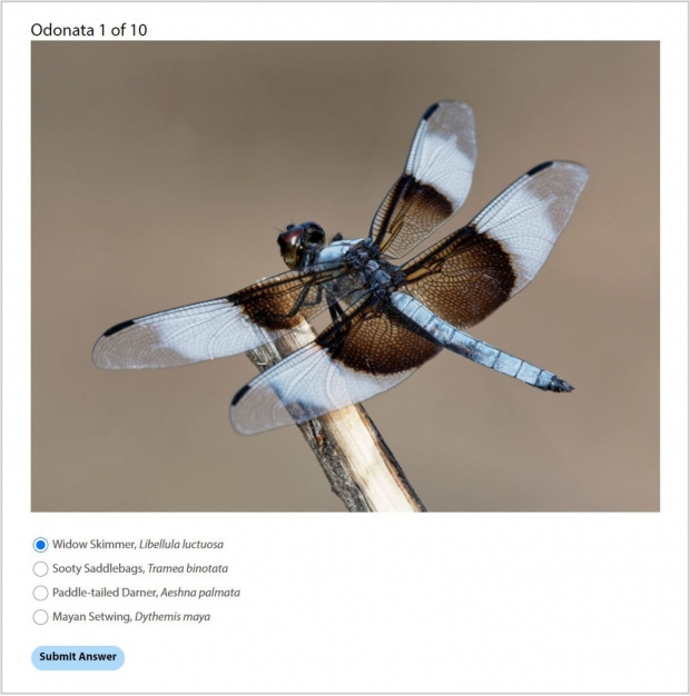 Odonata Quiz: Identify the Dragonfly! Screenshot of one of the quiz questions.