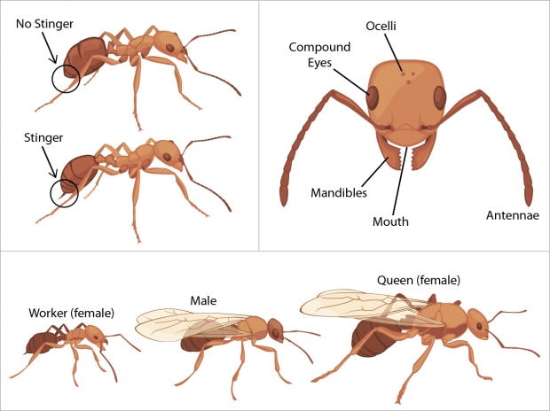 Assorted ant graphics.