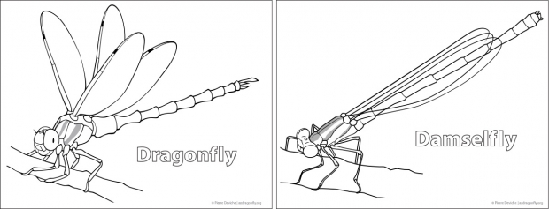 Dragonfly and damselfly coloring page.