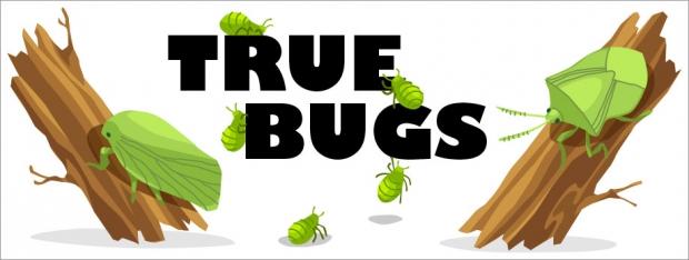 Story Header: True Bugs