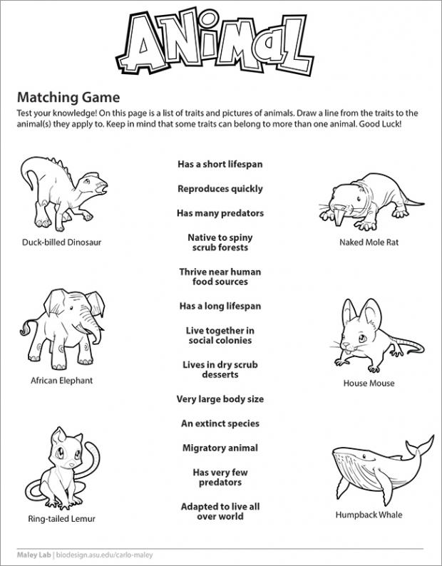 Animal matching game worksheet