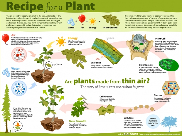 Recipe for A Plant Poster